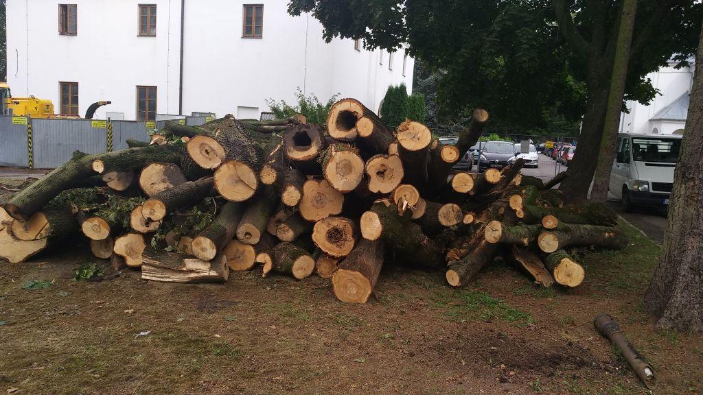 19 09umbp_park chore i niebezpieczne drzewa (1)