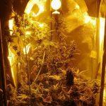 Kryminałki: Odpowie za uprawę jak też posiadanie narkotyków