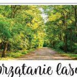 Siedlce: Caritas wyrusza na sprzątanie lasu